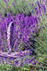 Lavender Notebook Cover Image