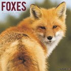 Foxes 2020 Wall Calendar Cover Image