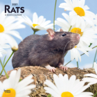 Rats 2021 Square Cover Image