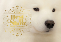 Best in Show: (Dog Photography Book for Dog Lovers, Dog Show Photo Book) Cover Image