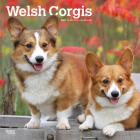 Welsh Corgis 2021 Square Cover Image