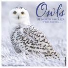 Owls 2020 Wall Calendar Cover Image