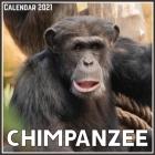 Chimpanzee Calendar 2021: Official Chimpanzee Calendar 2021, 12 Months Cover Image