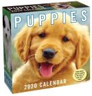 Puppies 2020 Day-to-Day Calendar Cover Image