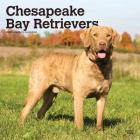 Chesapeake Bay Retrievers 2020 Square Cover Image