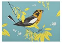Charley Harper: Blackburnian Warbler Small Boxed Cards Cover Image
