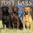 Just Labs 2021 Wall Calendar (Dog Breed Calendar) Cover Image