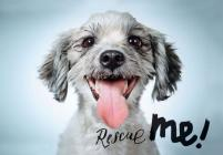 Rescue Me: Dog Adoption Portraits and Stories from New York City Cover Image
