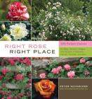 Right Rose, Right Place Cover Image