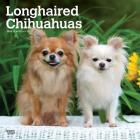 Chihuahuas, Longhaired 2020 Square Cover Image