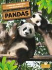 Osos Panda Cover Image