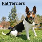 Rat Terriers 2020 Square Cover Image
