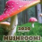 Mushrooms 2020 Mini Wall Calendar Cover Image