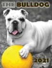 The Bulldog 2021 Calendar Cover Image