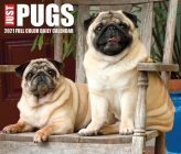 Just Pugs 2021 Box Calendar (Dog Breed Calendar) Cover Image