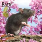 Rats 2020 Square Cover Image