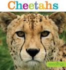 Seedlings: Cheetahs Cover Image