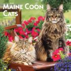 Maine Coon Cats 2020 Square Cover Image
