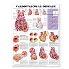 Cardiovascular Disease Anatomical Chart Cover Image
