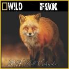 Fox Calendar 2021: Fox calendar 2021