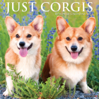 Just Corgis 2021 Wall Calendar (Dog Breed Calendar) Cover Image