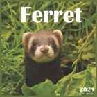 Ferret: 2021 Wall & Office Calendar, 12 Month Calendar Cover Image