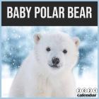 baby Polar bear 2021 Calendar: 16 Months Calendar 2021 baby bear Cover Image