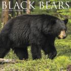 Black Bears 2020 Wall Calendar Cover Image