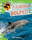 Curious Dolphin Cover Image