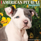Just American Pit Bull Terrier Puppies 2021 Wall Calendar (Dog Breed Calendar) Cover Image