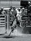 Saddle Broncs: Just for the Helluvit Cover Image