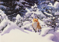 Red Fox in Winter Deluxe Boxed Holiday Cards Cover Image
