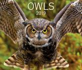 Owls 2019 Cover Image