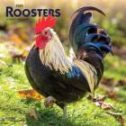 Roosters 2020 Square Cover Image