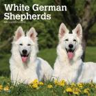 German Shepherds, White 2020 Square Cover Image