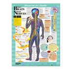 Blueprint for Health Your Brain and Nerves Chart Cover Image
