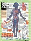 Blueprint for Health Your Heart and Blood Chart Cover Image