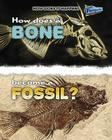 How Does a Bone Become a Fossil? Cover Image