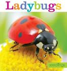 Seedlings: Ladybugs Cover Image