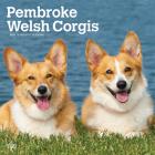 Welsh Corgis, Pembroke 2021 Square Cover Image