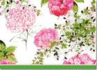 Rose Garden Note Cards (Stationery, Boxed Cards) Cover Image