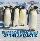 Emperor Penguins of the Antarctic (Brrr! Polar Animals) Cover Image