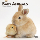 Baby Animals 2021 Mini 7x7 Cover Image