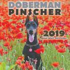 Doberman Pinscher 2019 Mini Wall Calendar Cover Image