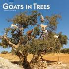 Goats in Trees 2020 Square Cover Image