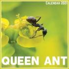 Queen Ant Calendar 2021: Official Queen Ant Calendar 2021, 12 Months Cover Image