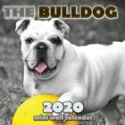 The Bulldog 2020 Mini Wall Calendar Cover Image