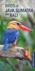 Birds of Java, Sumatra and Bali (Pocket Photo Guides) Cover Image