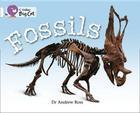 Fossils Workbook (Collins Big Cat) Cover Image