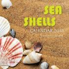 Sea Shells Calendar 2018: 16 Month Calendar Cover Image